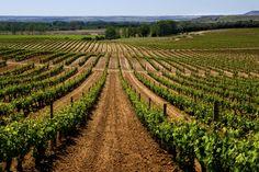 Det amerikanske akademiet Wine Star Awards, vinverdenens Oscar, har kåret Ribera del Duero til verdens beste vin-distrikt 2012. Utdelingen er den trettende i rekken, og skal skje 28. januar 2013 i Public Library i New York. Ribera de Duero figurerer dermed blant topp vindistrikter som Napa Valley i California, Cape Winelands i Syd- Afrika, Walla Walla Valley i USA og Loira-dalen i Frankrike.
