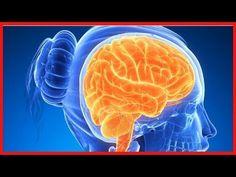 6 aliments qui stimulent le cerveau - YouTube Stress, Garden, Mental Health, The Brain, Vitamins, Food