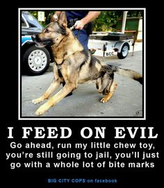 police dogs, sometimes I think they don't train the working dogs as well as the sport dogs. Or maybe the barely controlled look is what they're going for. Cops Humor, Police Humor, Police Dogs, Police Wife, Police Officer, Cop Dog, Military Working Dogs, Military Dogs, Military Memes