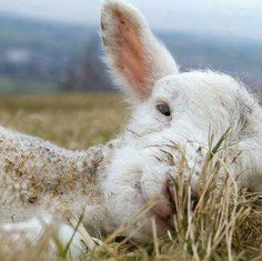 Please be vegan. For love. For decency. For peace on earth. Please.