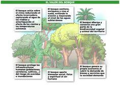 Movilidad sostenible, ecología y decrecimiento: RESUMEN: COMO DISEÑAR UN BOSQUE COMESTIBLE.