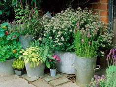 Containers on a Patio: Scented plants add an element of nostalgia to a garden patio filled with containers of various sizes. From HGTV.com's Garden Galleries