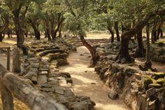 """Bitti. Resti archeologici di età Nuragica. Il sito si chiama """"Romanzesu""""."""