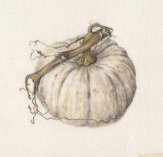 White Pumpkin<br />Watercolor on Vellum
