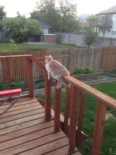 This cat who gave up trying to figure out how to sunbathe on the deck. | 21 Animals Who Aren't Even Trying At All