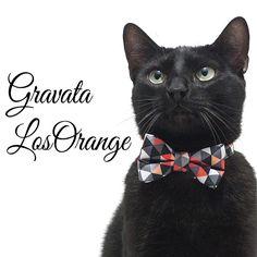 Ariel lindíssimo de Gravata da www.cacaudresspet.com  * Para cães e gatos  #dog #dogs #collar #bow #gravata #moda #fashion #black #white #branco #preto #gatopreto #backcat #cachorro #gato