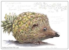 """Hedgehog/Pineapple = Hedgeapple - Mixing vegetables and animals illustration series """"Samples from the Lab"""" by Rob Foote, South Africa."""