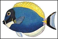 Tropické ryby zavěšení na zeď - Malované Metal Tropical Fish - haitský Steel Drum Metal Art