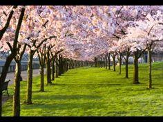 "Antonio Lucio Vivaldi March 1678 -- 28 July nicknamed il Prete Rosso (""The Red Priest""). Antonio Vivaldi ecards on Spring Cherry Blossom Tree, Blossom Trees, Brian's Song, Perry Como, Italian Baroque, Spring Tree, Male Model, Happy Spring, Spring Has Sprung"