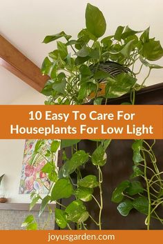 These are the best indoor plants for low light, especially for beginning houseplant gardeners. These low-light houseplants are also easy-care houseplants. This list of 10 low-light indoor plants are also easy-care indoor plants. #houseplantsforbeginners Easy Care Houseplants, Easy Care Indoor Plants, Best Indoor Plants, Low Light Plants, Low Lights, House Plants, Indoor House Plants, Foliage Plants, Caramel Highlights