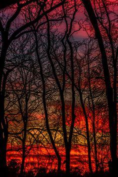North Carolina USA / Swamp Sky - Richard Mathis Photography: richardmathis.com