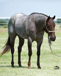 CUSTOM CASH IN ROAN, quarter horse mare