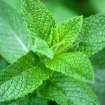 Vous avez l'habitude des thés et boissons aromatisées à la menthe. Mon Jardin Ma Maison vous fait découvrir ses autres bienfaits !