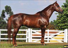 Quarter Horse - stallion Duce Bryan