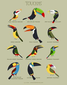 12 toucans, aracaris and toucanets! *NEW in 2017* Curl-Crested aracari, Keel-billed toucan, Spot-billed toucanet, Green Aracari, Toco Toucan, Guyana Toucanet, Yellow-Eared Toucanet, Chestnut-eared toucanet, Emerald Toucanet, Plate-Billed Mountain Toucan, Saffron Toucanet. - Choose from 3 different print sizes - printed with archival pigment inks on 60lb premium matte paper - packaged in clear plastic sleeve - shipped in a rigid mailer or mailing tube…
