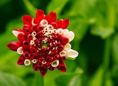 Flower by Martin Wait on 500px