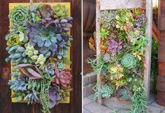 Fabriquer un tableau de plantes grasses et succulentes