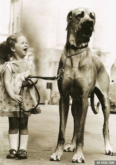 Enormously happy little girl with enormous dog, 1950s.