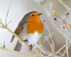 A Robin; When I see one I know the Lord is blessing me with new beginnings :)