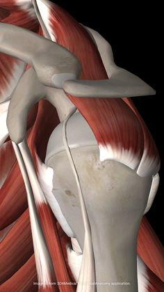 """The Rotator Cuff Says, """"Don't Do This Exercise!"""""""