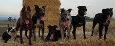 Tilly, Tuff, Cinch, Rat, Montana, Sis, Ringo