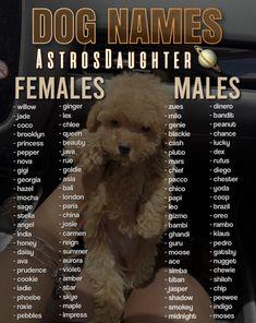 Cute Animal Names, Cute Puppy Names, Cute Names For Dogs, Cute Baby Dogs, Cute Animal Photos, Cute Dogs And Puppies, Cute Funny Animals, Cute Baby Animals, Cute Babies