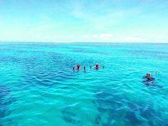 Swimming on the Great Barrier Reef #greatbarrierreef #spearfishing #reef by dylan25s http://ift.tt/1UokkV2