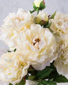 White Peony Flower S