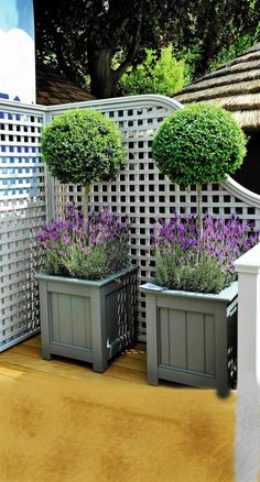 lavender and boxwood #boxwoodlandscapefrontyard