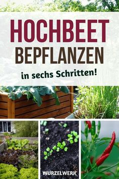 Hochbeet bepflanzen in 6 Schritten (+ Beispielplan) Planting the raised bed in 6 steps: After planting, of course, the planting … Raised Garden Beds, Raised Beds, Growing Plants, Growing Vegetables, Potager Bio, Planting Plan, Vegetable Garden Design, Diy Garden Projects, Pallet Projects