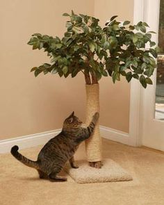 Cat Care Kittens Lifelike Cat Scratching Tree - CatspotLuxury Cat Tree - Round Base (Cat Trees): Cat Resort is a beautifully designed replica tree that will bring fun, exercise, relaxation and comfort to your indoor cat. Cool Cat Trees, Cool Cats, Diy Cat Tree, Cat Scratching Tree, Diy Cat Scratching Post, Gatos Cool, Photo Chat, Cat Room, Cat Condo