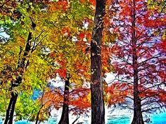 Beautiful Lakeside Autumn trees in Tennesssee
