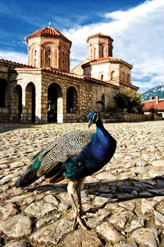 A Journey In Time: Macedonia Macedonia Ohrid, Macedonia Greece, Macedonia People, Montenegro, Cool Places To Visit, Places To Go, Bósnia E Herzegovina, Republic Of Macedonia, Most Beautiful Cities