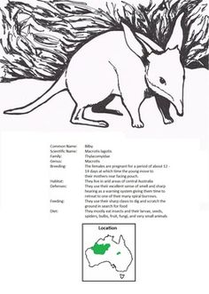 Austrailan animal coloring and fact sheets Geography Lessons, World Geography, Cultural Studies, 6th Grade Social Studies, Australia Day, Study History, Montessori Classroom, Australian Animals, Australian Curriculum