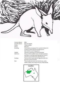 Kangaroo Life Cycle in 3-Part Cards, Life Cycle Charts