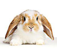 Rabbit Care Tips