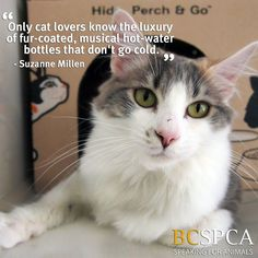Nelli is waiting for her forever home at the BC SPCA Surrey Education & Adoption Centre.