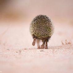 "Hedgehog ""bye bye!"" by Yazeed Alsahli"