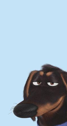 Cocoppa Wallpaper, Dog Wallpaper, Animal Wallpaper, Disney Wallpaper, Pets Movie, Dachshund Art, Cartoon Dog, Dog Cartoons, Secret Life Of Pets