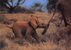 Baby African Elephant | Collection Picture
