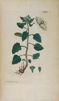 https://flic.kr/p/ft9zYh | n37_w1150 | Afbeeldingen van zeldzaame gewassen. Te Leyden : By Johannes le Mair, 1775.. biodiversitylibrary.org/page/285489