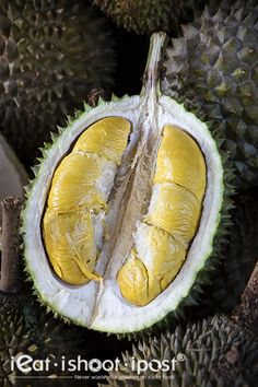 818 Durians: Durians for the Next Generation! - ieatishootipost