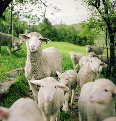 flock ~