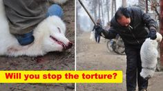 End the suffering of millions of animals SKINNED ALIVE for their fur in China!