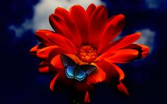 Butterfly on Orange Flower by mystery-nicky on DeviantArt ~ With optimal health often comes clarity of thought. Click now to visit my blog for your free fitness solutions!