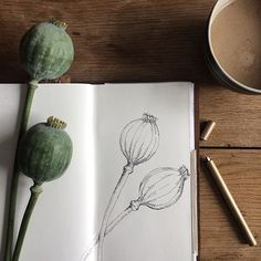 Drawing flowers doesn't have to take long and be overly complicated. I find it helpful figuring out the basic shapes before I put pen to paper. A Poppyseed really is just an oval with some lines, a little crown and two more lines for the stem. Add some shading and finished is a minimalist botanical illustration.
