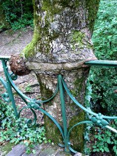 arbres-insolites-florac-france