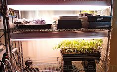 Indoor Seed Starting Rack, great gardening blog