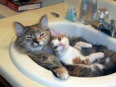 CATS: mama and baby.kitten in the  sink