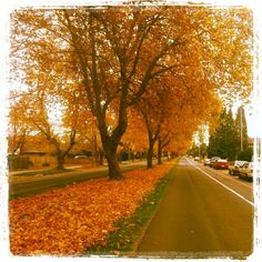 #Autumn in #Victoria #yyj Walks, Country Roads, Victoria, Autumn, Landscape, Beautiful, Scenery, Fall, Landscape Paintings